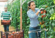 México destaca por protección arancelaria en productos agrícolas